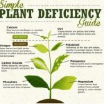 plant deficiency guide